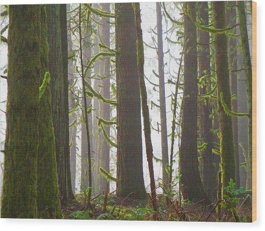 Drifting Light Wood Print