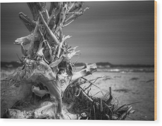 Driftwood At Race Point Wood Print