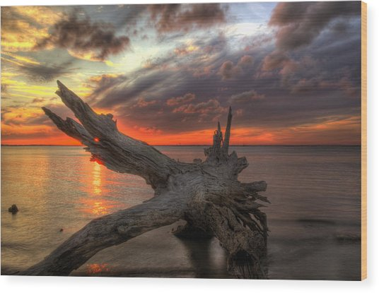 Driftwood Eye Of Fire Wood Print