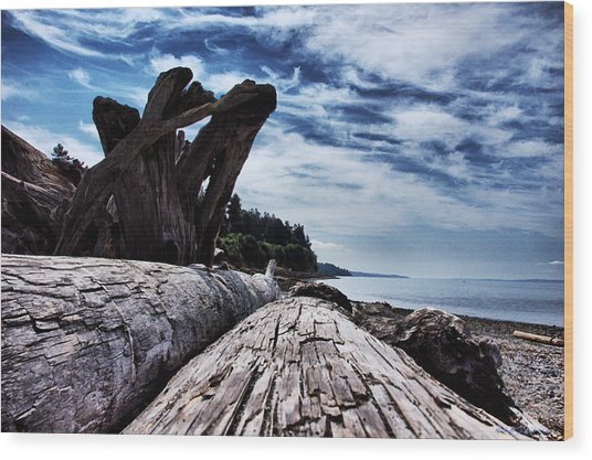 Driftwood In Teddy Bear Cover Wood Print