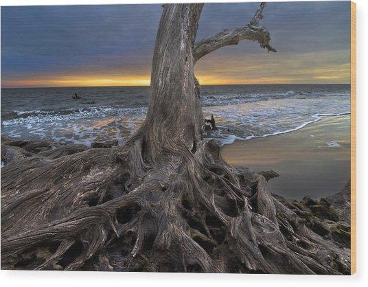 Driftwood On Jekyll Island Wood Print