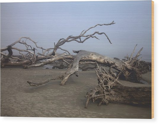 Driftwood Trees On Jekyll Island Wood Print