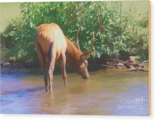 Drinking Elk Wood Print by Audreen Gieger