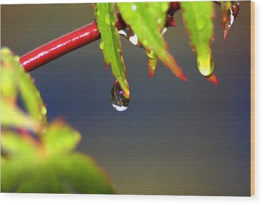 Drip Drop Wood Print