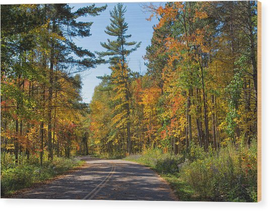 Drive Through Splendor In Minnesota Wood Print