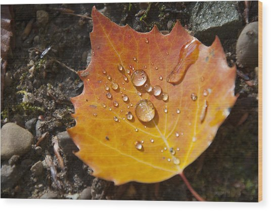 Droplets In Autumn Leaf Wood Print