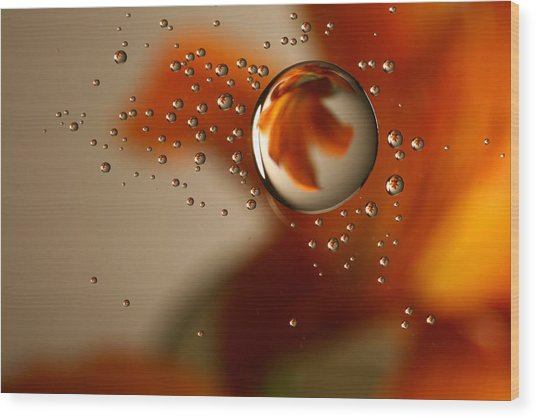 Drops Wood Print by Brady D Hebert