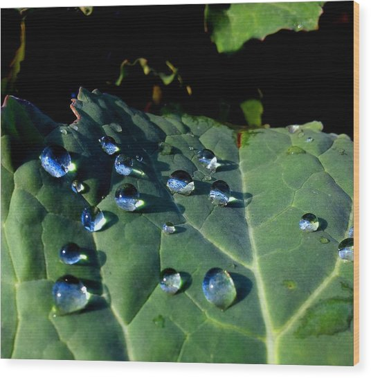 Drops On A Leaf Wood Print by Claudia Cefali