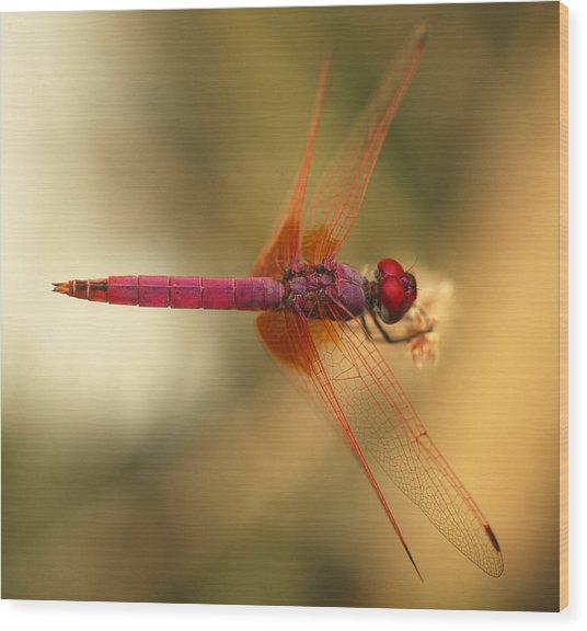 Dropwing Dragonfly Wood Print