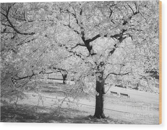 Druid Hill Park Spring Wood Print