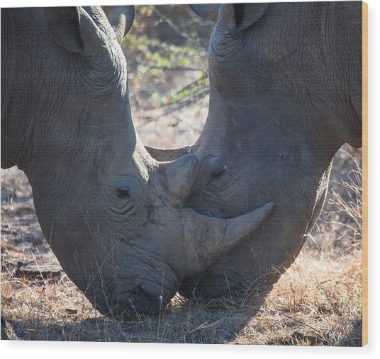 Dual Rhino's Wood Print by Craig Brown