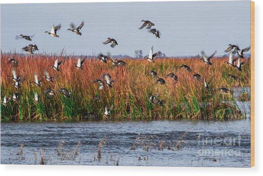 Duck Blind Wood Print