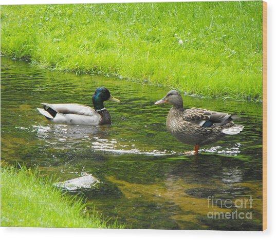 Duck Couple Wood Print