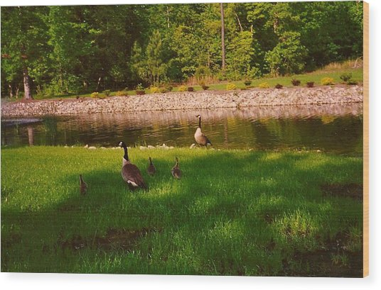 Duck Family Getting Back From Pond Wood Print