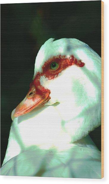 Duck Wood Print by Jennifer Burley
