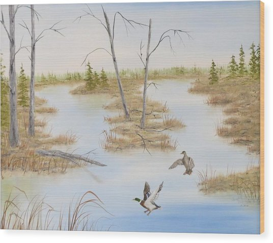 Duck Marsh Wood Print by Janet Hufnagle