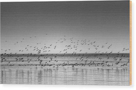 Duck Over Lake 1 B_w Wood Print