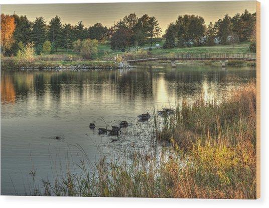 Duck Pond Wood Print