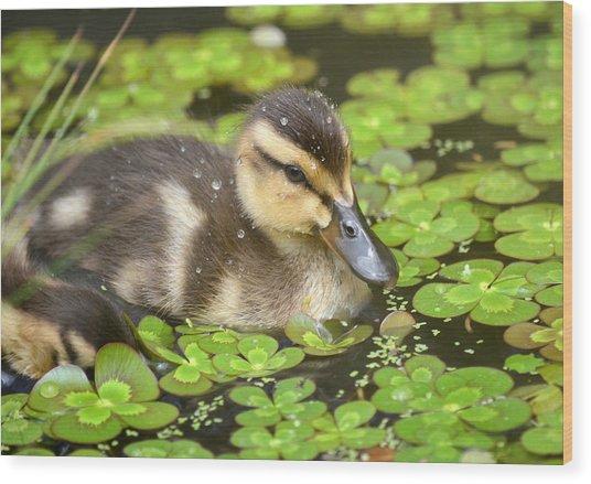 Duck Soup 3 Wood Print