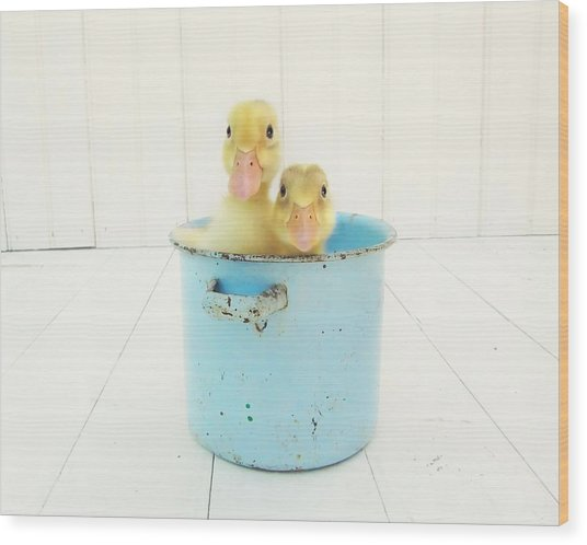 Duck Soup Wood Print
