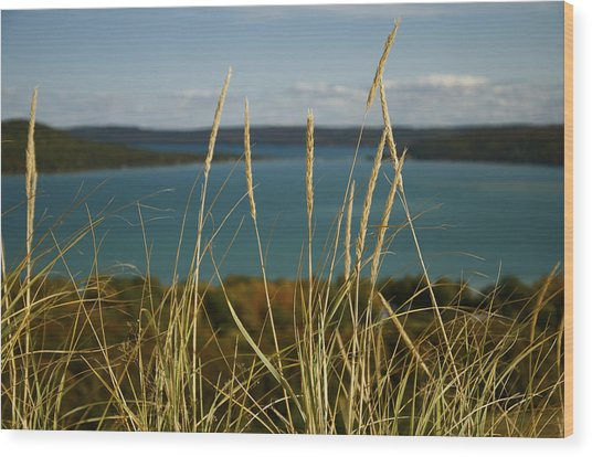 Dune Grass On A Sunny Fall Day Wood Print