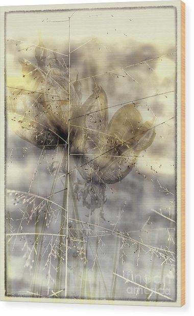 Dune Grass On Yucca Wood Print