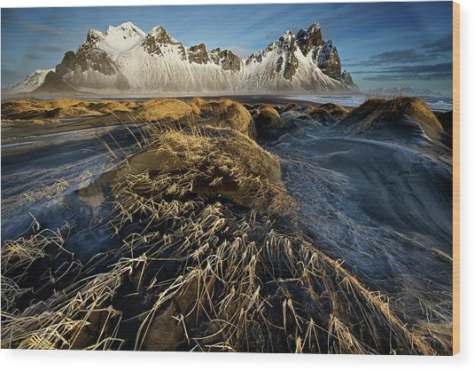 Dunes And Sea Interact Wood Print by Trevor Cole
