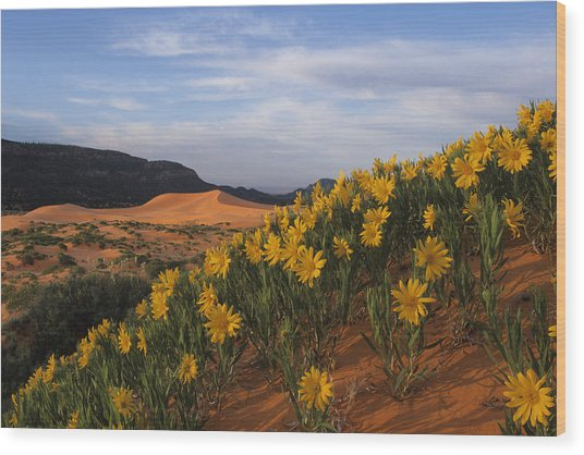 Dunes In Bloom Wood Print