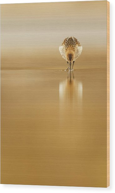 Dunlin Reflection Wood Print