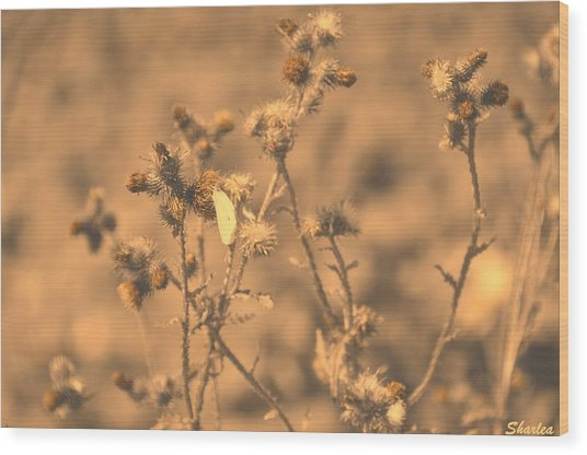Dusty Desert  Wood Print