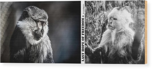 Wood Print featuring the photograph diptych Last hope of Freedom  by Stwayne Keubrick