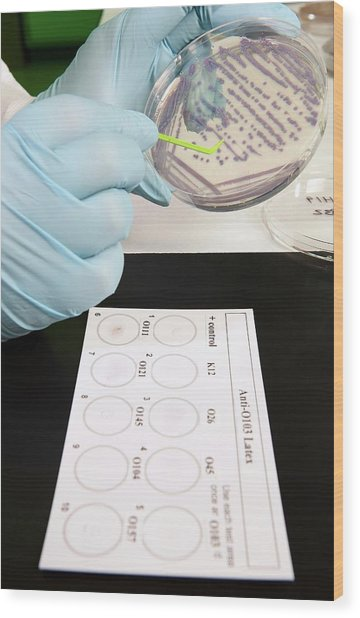 E. Coli Stec Bacterial Test Wood Print by Peggy Greb/us Department Of Agriculture