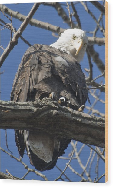 Eagle 2 Wood Print by Valerie Wolf
