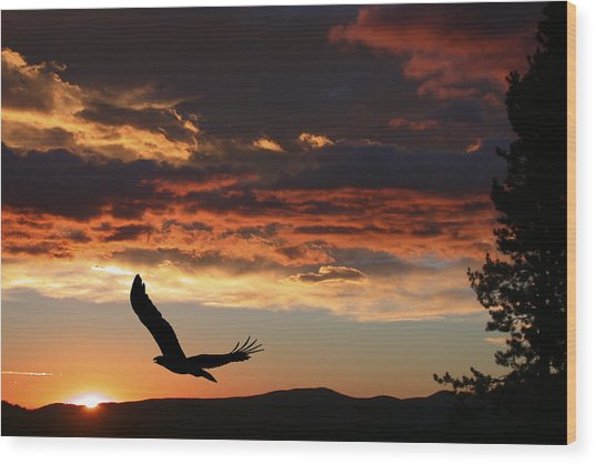 Eagle At Sunset Wood Print