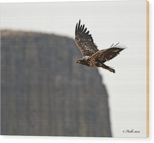 Eagle Flyby Wood Print