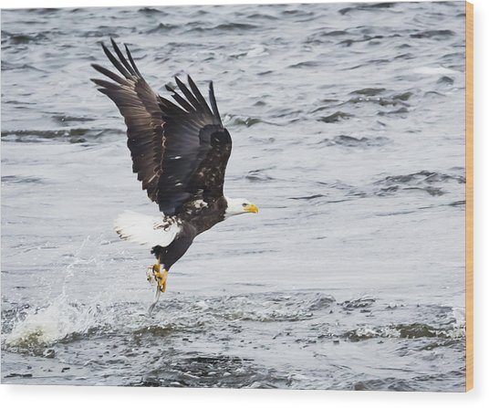 Eagle Hunting On The Wisconsin River Wood Print by Ricky L Jones