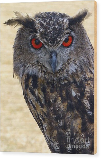 Eagle Owl Wood Print