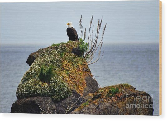 Eagle Resting Wood Print by Phillip Garcia