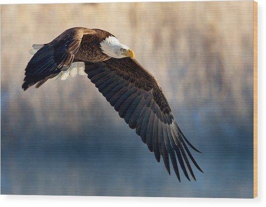 Eagle Sore Wood Print