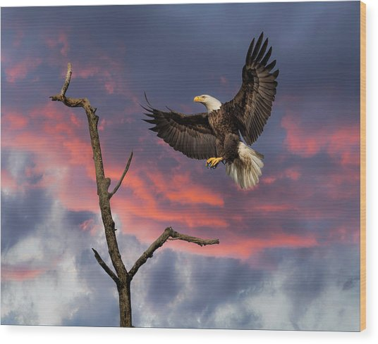 Eagle Sunset Landing Wood Print