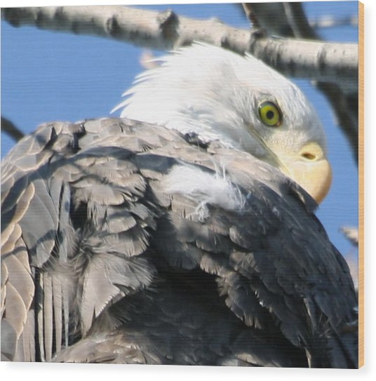 Eagle Wood Print by Valerie Wolf