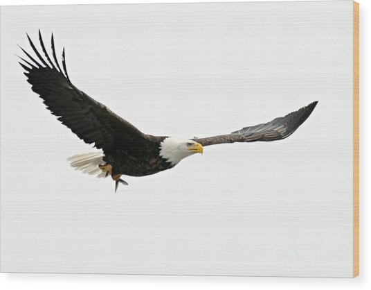 Eagle With Fish Wood Print