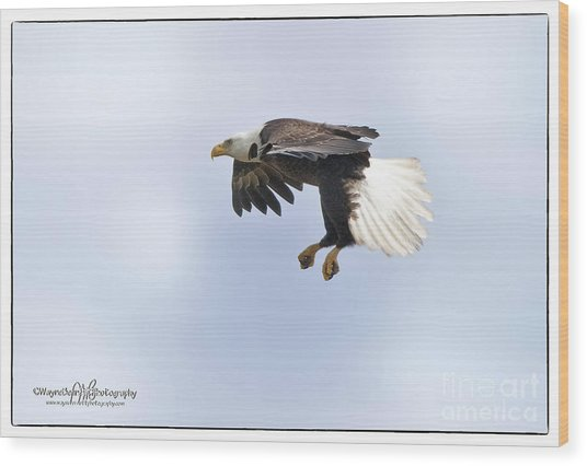 Eaglelanding Approach Wood Print by Wayne Bennett