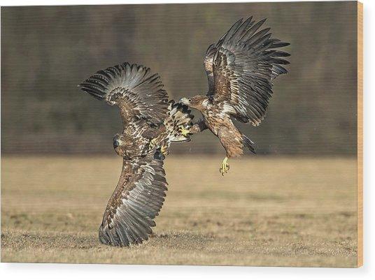 Eagles Fighting Wood Print
