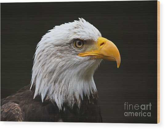 Bald Eagle Profile Wood Print