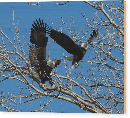 Eagles Wood Print