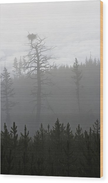 Eagle's Nest In Fog Wood Print