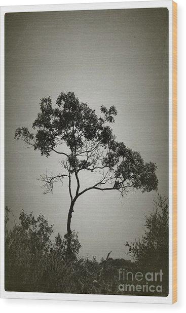 Early Bloomer - No.4838v Wood Print