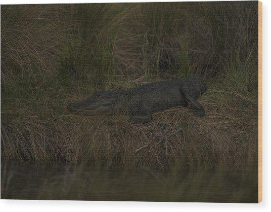 Early Evening Ambush Wood Print by Frank Feliciano