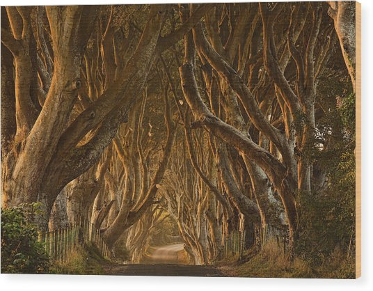 Early Morning Dark Hedges Wood Print by Derek Smyth